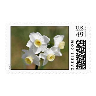 Jonquil flower postage