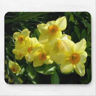 Jonquils/Daffodils/Narcissus Mousepads