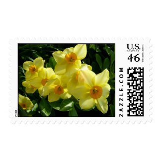 Jonquils/Daffodils/Narcissus Stamps