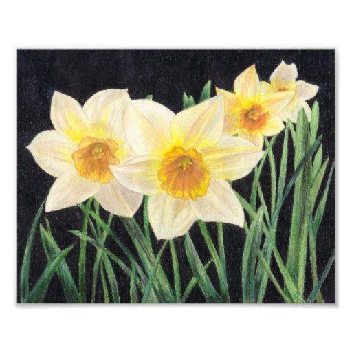 Jonquils - Flower Art Print Photographic Print