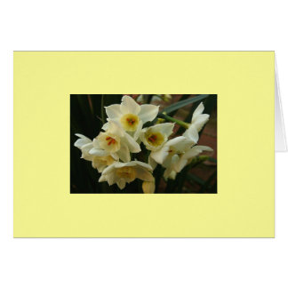 Jonquil's Greeting Card