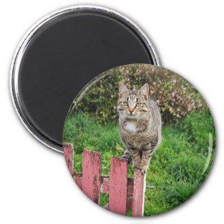 Jonty Bloom  - 2¼ Inch Round Magnet