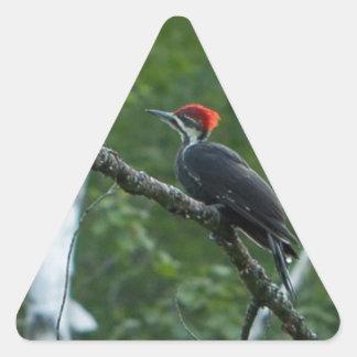 Jordan Pond Pileated Woodpecker. Triangle Sticker