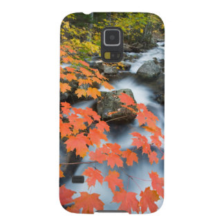 Jordan Stream in fall in Maine's Acadia National Case For Galaxy S5