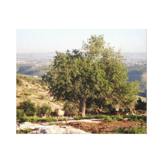 Jordan Tree Canvas Print
