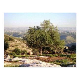 Jordan Tree Postcard