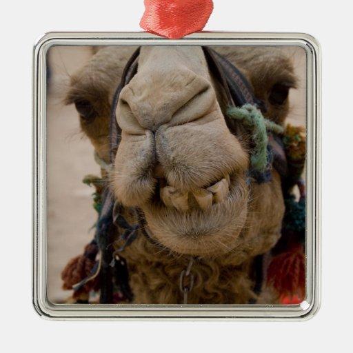 Jordania, ciudad antigua de Nabataean del Petra. L Ornamentos Para Reyes Magos