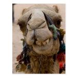 Jordania, ciudad antigua de Nabataean del Petra. L Tarjeta Postal