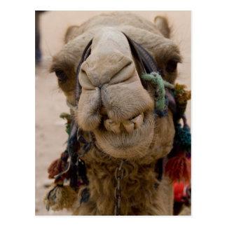Jordania, ciudad antigua de Nabataean del Petra. Tarjeta Postal