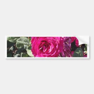 Jorianda Rose Bumper Sticker