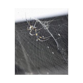 Joroo Spider - Araña Joroo Canvas Print