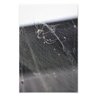 Joroo Spider - Araña Joroo Photo Print