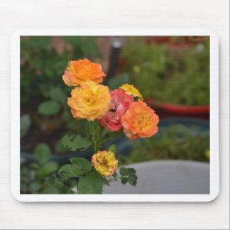 Joseph's coat roses mouse pad