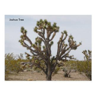 joshua, Joshua Tree Postcard