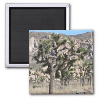 Joshua Tree 2 Inch Square Magnet