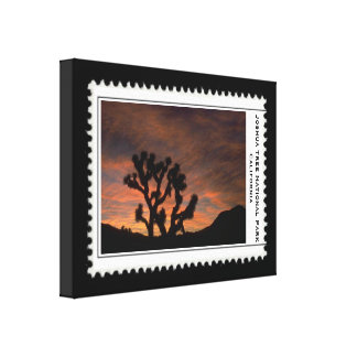 Joshua Tree California Stretched Canvas Print
