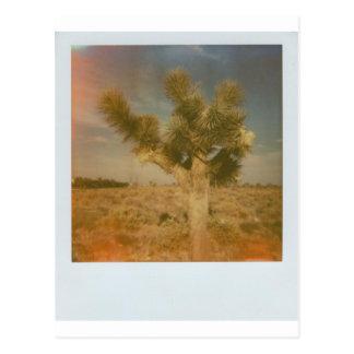 Joshua Tree Decorated Postcard