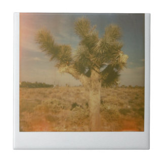 Joshua Tree Decorated Tile