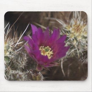 Joshua Tree Desert Blooms Mouse Pad