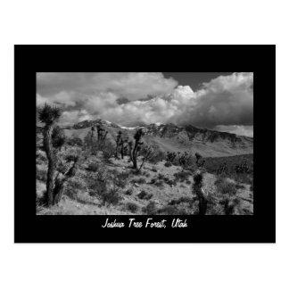 Joshua Tree Forest, Utah Postcard