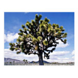 Joshua Tree - Joshua Tree National Park Postcard
