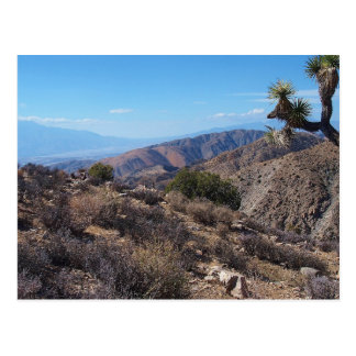 Joshua Tree National Park 3 Postcard