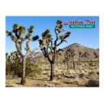 Joshua Tree National Park, California Post Card
