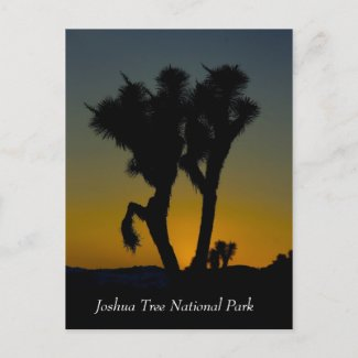 Joshua Tree National Park, California Postcard postcard