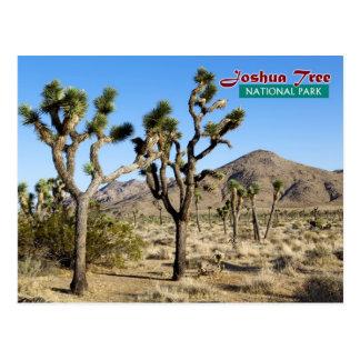 Joshua Tree National Park California Post Card