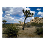 Joshua Tree National Park, California, U.S.A. Postcards