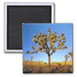 Joshua Tree National Park, California. USA. 2 Inch Square Magnet