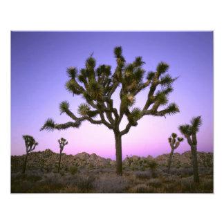 JOSHUA TREE NATIONAL PARK CALIFORNIA USA PHOTO PRINT