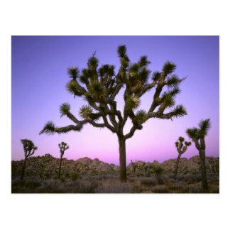 JOSHUA TREE NATIONAL PARK CALIFORNIA USA POST CARD