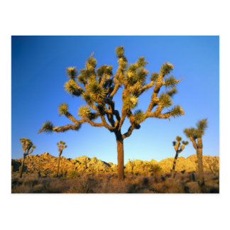 Joshua Tree National Park California USA Post Cards