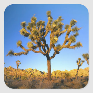 Joshua Tree National Park, California. USA. Sticker
