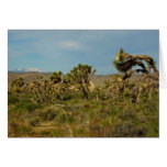 Joshua Tree National Park Desert Landscape Card