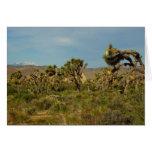 Joshua Tree National Park Desert Landscape Card