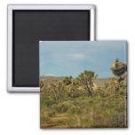 Joshua Tree National Park Desert Landscape Magnet