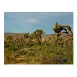 Joshua Tree National Park Desert Landscape Postcard