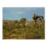Joshua Tree National Park Desert Landscape Postcard