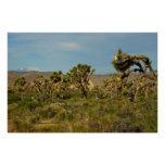 Joshua Tree National Park Desert Landscape Poster