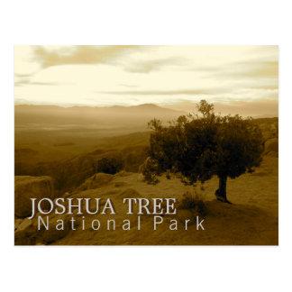 Joshua Tree National Park Postcard
