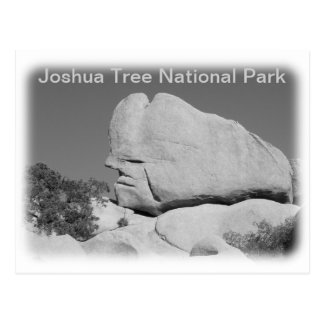 Joshua Tree National Park Postcard! Postcard