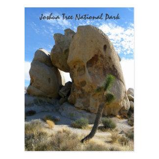 Joshua Tree Park Postcard! Postcard