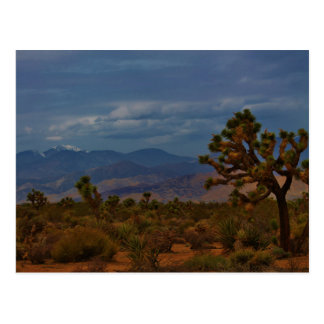 Joshua Tree View Postcard