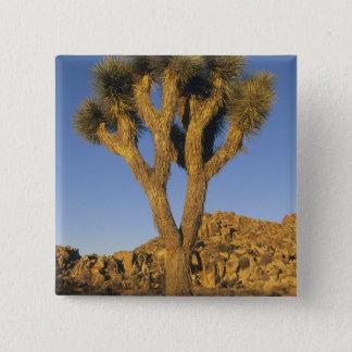 Joshua Tree, Yucca brevifolia), and granite Button
