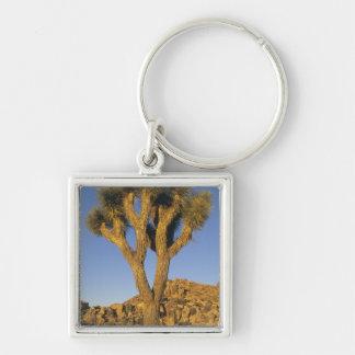 Joshua Tree, Yucca brevifolia), and granite Keychains
