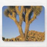 Joshua Tree, Yucca brevifolia), and granite Mouse Pad
