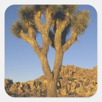 Joshua Tree, Yucca brevifolia), and granite Sticker