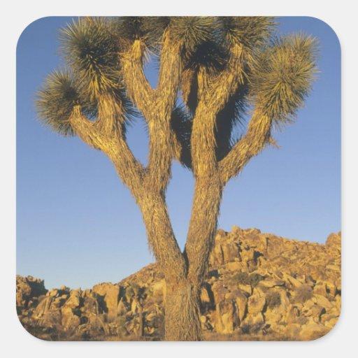 Joshua Tree, Yucca brevifolia), and granite Square Sticker